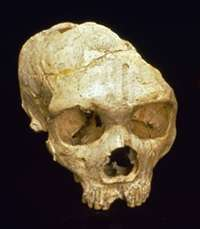 Invisible volcanic ash gives clues to Neanderthal demise