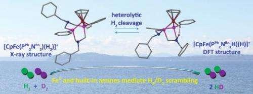 Iron center and pendant nitrogen needed to achieve catalyst's goal