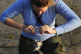 Migratory birds may reveal further impact of oil spill