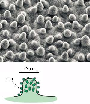Nanomaterials: Shedding light and water