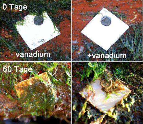 Paints and coatings containing bactericidal agent nanoparticles combat marine fouling
