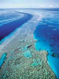 Science official: Ocean acidity major reef threat