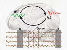 Short-term memory is based on synchronized brain oscillations