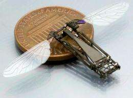 Studying butterfly flight to help build bug-size flying robots