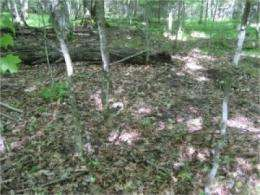 Study shows earthworms to blame for decline of ovenbirds in northern Midwest forests