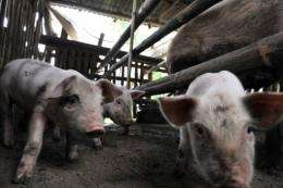 The World Bank said on Monday it plans to buy carbon credits from pig farms in the Philippines