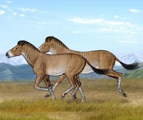 Three-Toed Horses Reveal the Secret of the Tibetan Plateau Uplift