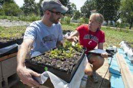 Native Plant Fares Well in Pilot Green Roof Research Study