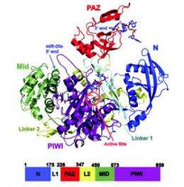Researchers solve structure of human protein critical for silencing genes