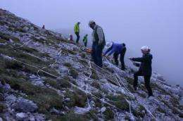Climate change is altering mountain vegetation at large scale
