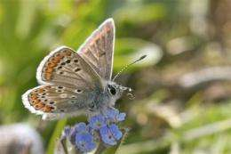 Global warming winner: Once rare butterfly thrives (AP)