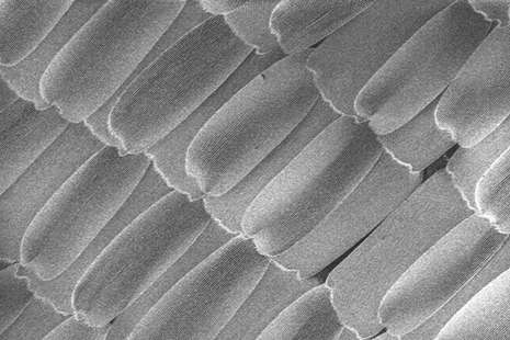 How butterfly wings can inspire new high-tech surfaces