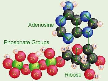 Life's first taste of phosphorus