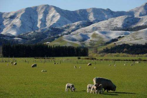 "Scientists measured the ""creeping earthquakes"" when they investigated a section of the Alpine Fault in South Island"