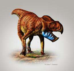 Scientists name two new species of horned dinosaur