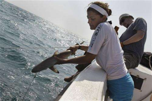 Shark finning hitting Gulf sharks hard