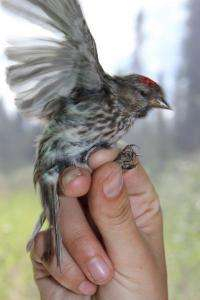 Climate change to fuel northern spread of avian malaria