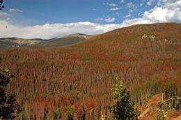 Climate change could cripple southwestern forests