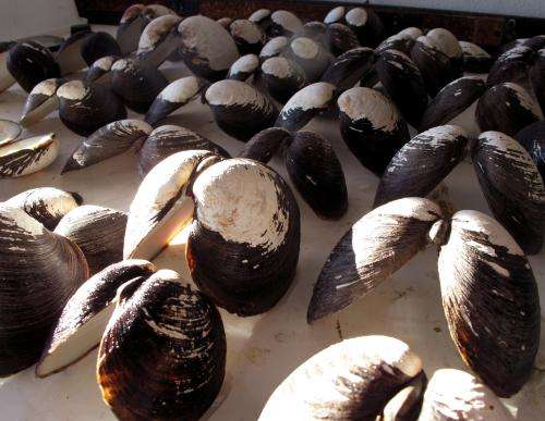 Iowa State researchers study clam shells for clues to the Atlantic's climate history