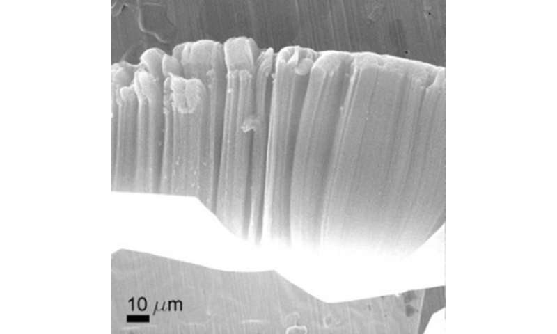 James' bond: A graphene / nanotube hybrid