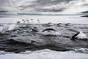 Protection needed for critical East Antarctic marine habitats