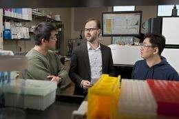 Researchers identify novel regulatory network within legumes