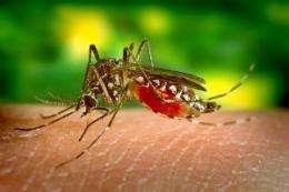 Climate change to increase tropical disease range