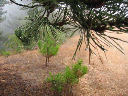 New study shows how climate change could affect entire forest ecosystems