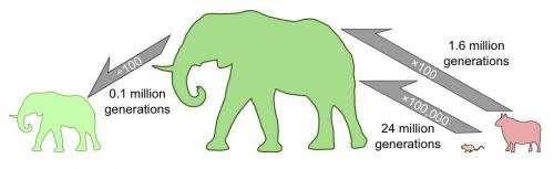 Mouse to elephant? Just wait 24 million generations