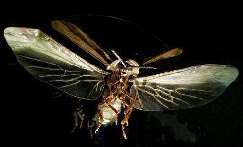 A large scale firefly