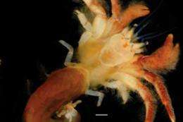 American University biologist discovers new crab species