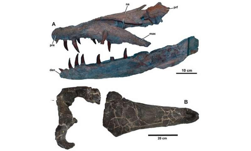 Ancient crocodiles ate like killer whales