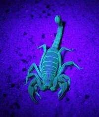 An elusive new scorpion species from California lives underground