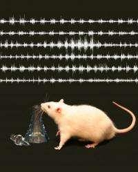 Animals learn to fine-tune their sniffs