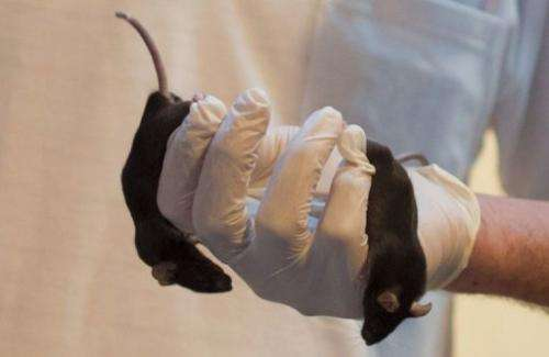 An Israeli company is using mice as sniffer animals for the first time