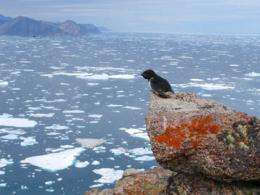 Arctic seabirds adapt to climate change