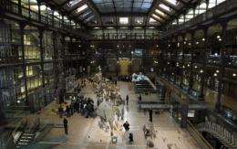 A view of the Galerie de Evolution (Evolution Gallery) of the Museum National d'Histoire Naturelle