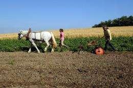 A woman plows on a farm in June 2012 on land in southwestern France