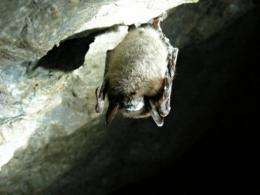 Between 5.7 and 6.7 million bats have died in North America due to a fungus known as white-nose syndrome