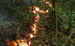 Birds' diverse traits survive Amazon fires
