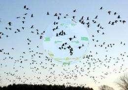 Birds evolved compass 'head up display'