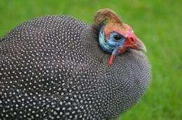 Birds may spread, not halt, fever-bearing ticks