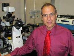 Brake on nerve cell activity after seizures discovered