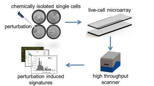 Breakthrough technology focuses in on disease traits of single cells