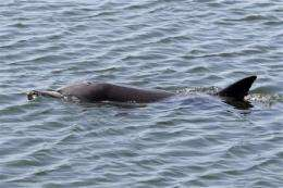 Calif. rescuers hope dolphin finds way back to sea (AP)