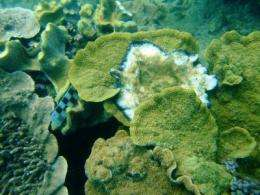 Chemical microgradients accelerate coral death at the Great Barrier Reef
