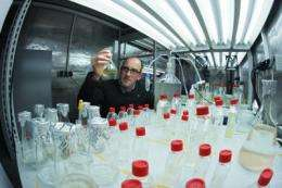 Chemists reveal how algae delete unwanted 'competitors'