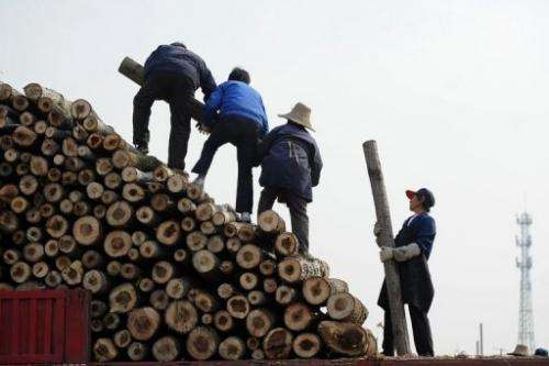 China's demand for foreign wood has tripled since 2000 to reach 180 million cubic metres last year