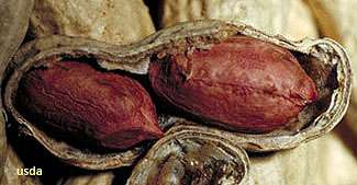 Keeping peanut skins in the mix boosts nutrition