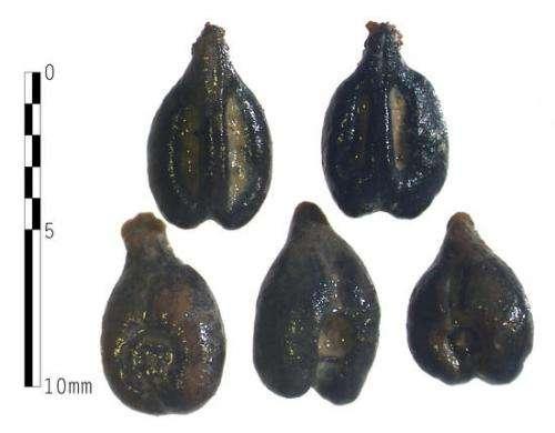 Classics professor unearths archaeological clues about ancient Roman vineyards